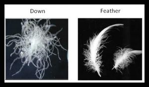 down-feather